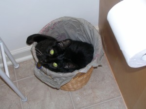 That's right, he put himself in the garbage bin!