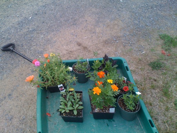 Flowers we bought: million bells, pansies, marigolds, stock...and one more