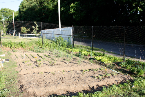 Fully planted garden as of 5/30/09