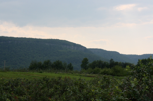 View of the Helderberg Escarpment from the blueberry field